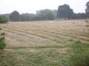 Ridge&Furrow-Land