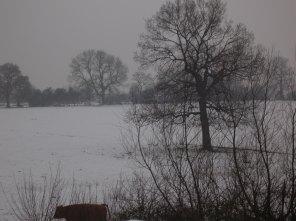 Snowscene+Cows (1)